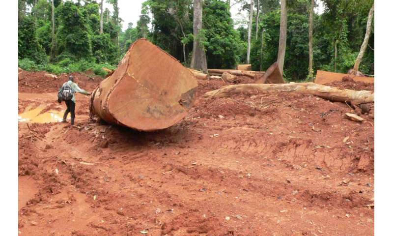 As demand for African timber soars, birds pay the ultimate price