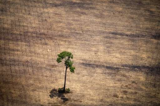 A tree stands in a deforested area in the middle of the Amazon jungle during a flight by Greenpeace activists over areas of ille
