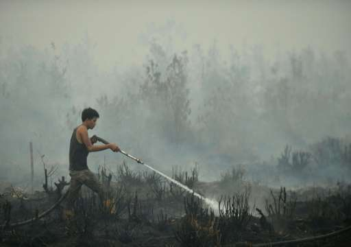 A volunteer helps extinguish a peatland fire in the outskirts of Palangkaraya, a city of 240,000 in Indonesia's central Kalimant