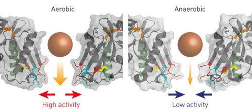 Bacterial enzyme controls the degradation of defective proteins