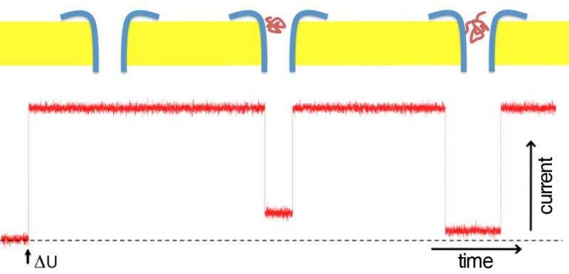 Bacterial protein serves as sensor
