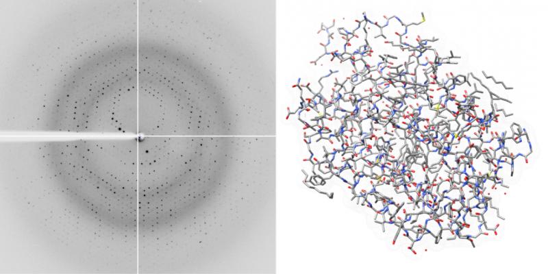 Bacteriorhodopsin crystals consume their smaller counterparts