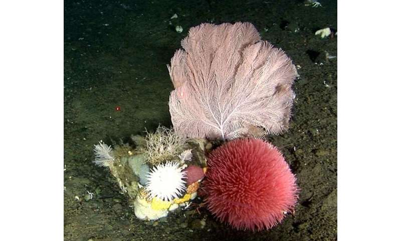 Bering Sea hotspot for corals and sponges