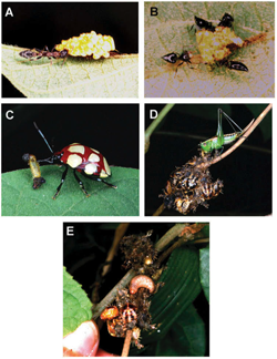 Biologists parse evolutionary 'arms race' between insects, predators and plants