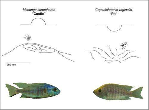 Biologists show how the evolution of physical traits can influence behavior