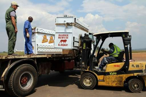 Boxes containing lions brought from South Africa are placed on a truck heading to Akagera National Park in the east of Rwanda, o