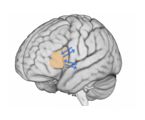 Broca's area is the brain's script writer where words take shape, study finds