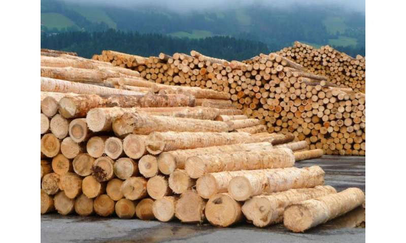 Build or burn? Competition for wood on the rise