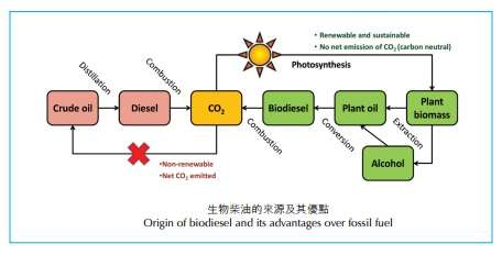 HOW TO MAKE BIODIESEL FUEL PDF DOWNLOAD