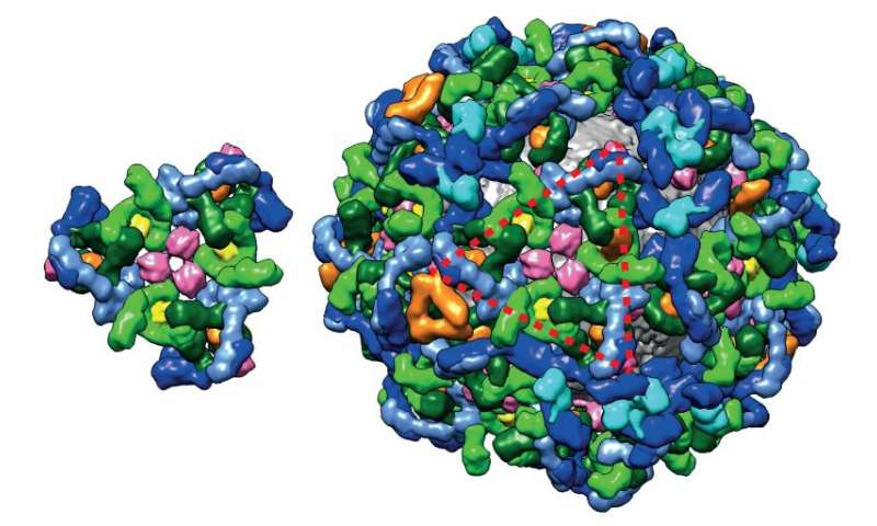 Cell machinery wears complex coat