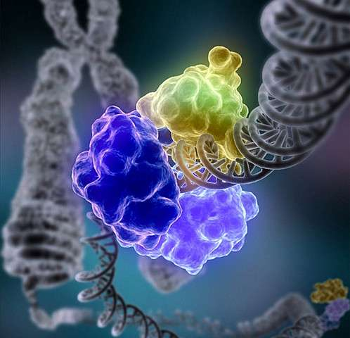 Chemistry nobel DNA research lays foundation for new ways to fight cancer