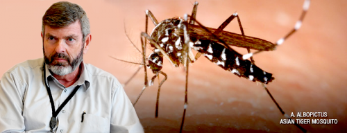 Chikungunya virus may be coming to a city near you -- learn the facts