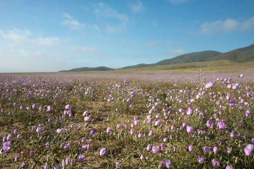 Chile plans to build a hydroelectric power plant in the world's most arid desert—the Atacama—in a revolutionary attempt to gener