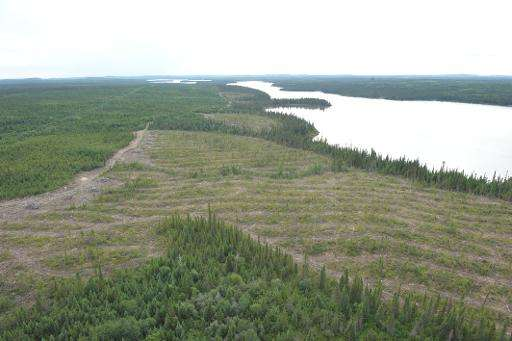 Clear-cut forest on the Broadback River pictured on August 18, 2015, in Waswanipi, Canada