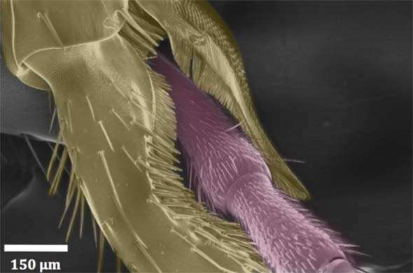 Close-up film shows for the first time how ants use 'combs' and 'brushes' to keep their antennae clean