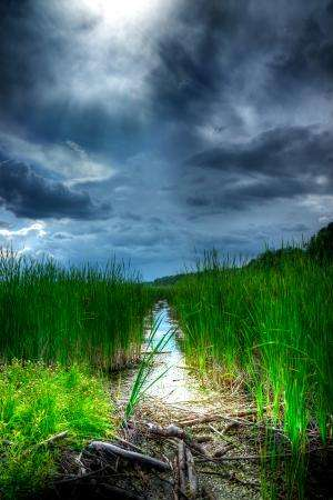 Common weed revealed to diminish water pollution