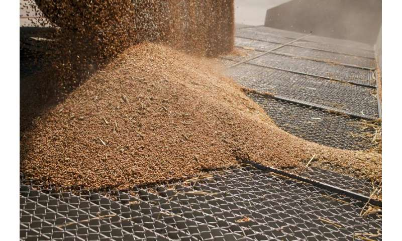 Company eliminates pests from stored grain with ozone and reduce costs