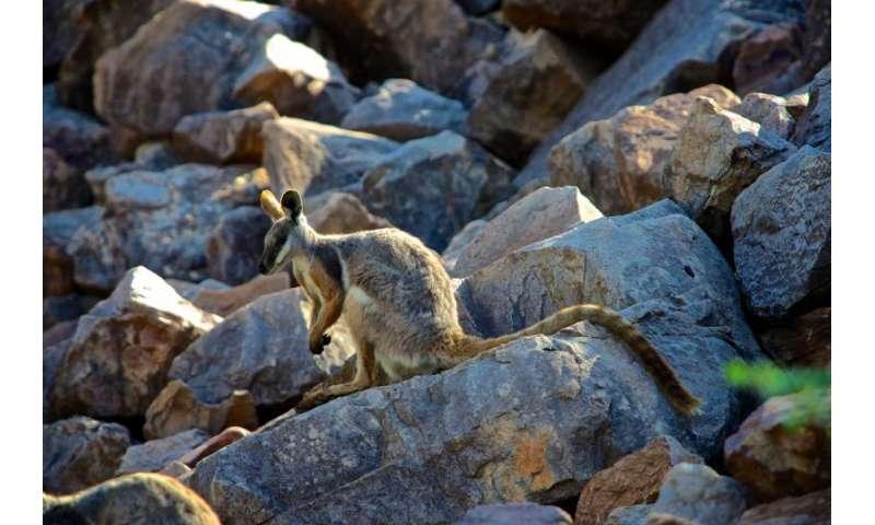 Controlling feral animals & plants will save unique species & $billions