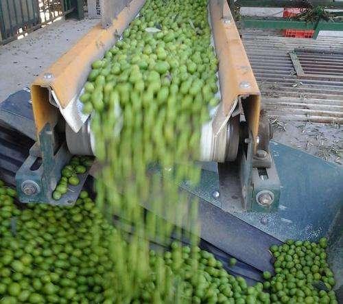 Converting olive mash into cash