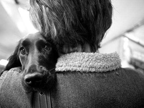 Could man's best friend be man's best medicine?
