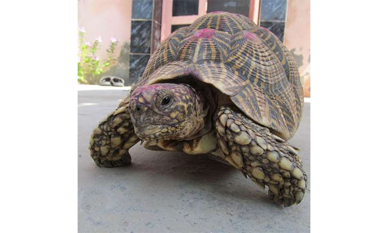 Counting stars: Illegal trade of Indian star tortoises is a far graver issue