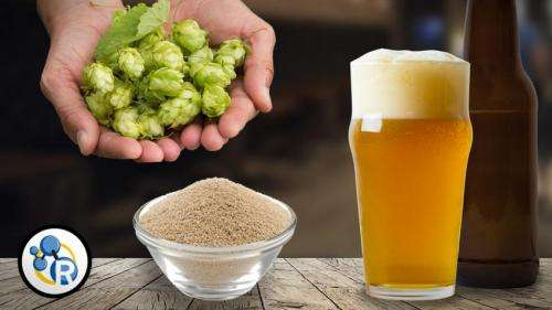 Craft beer chemistry (video)