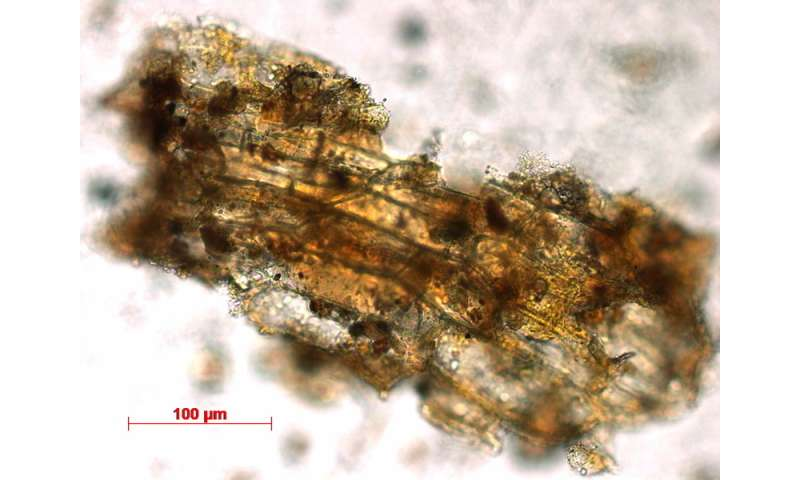 Dental calculus analysis reveals mushrooms were consumed as early as the Upper Palaeolithic