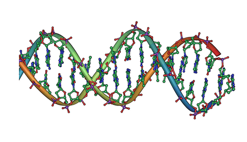 Researchers identify two proteins important for the demethylation of DNA