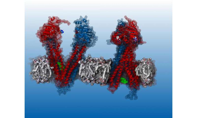 Drugs behave as predicted in computer model of key protein, enabling cancer drug discovery