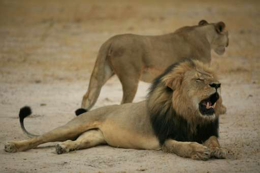 Early in July, Cecil the lion, the posterchild of Zimbabwean wildlife, was killed outside Hwange park by US trophy hunter Walter