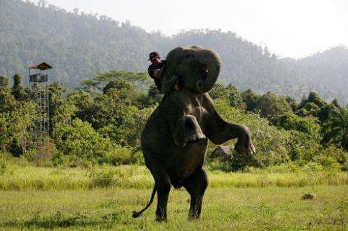 Elephants have joined the front line of the fight against poaching and illegal logging in the dense jungles of Sumatra