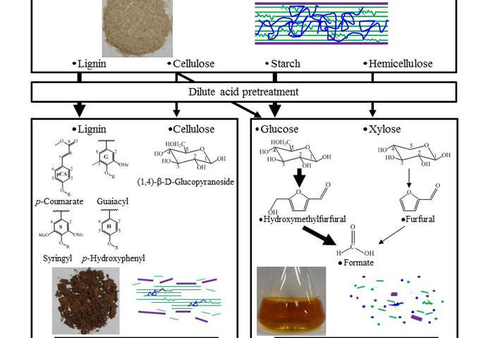 Elucidation of chemical ingredients in rice straw