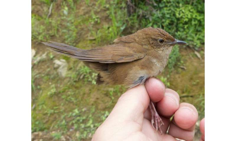 Elusive new bird International discovered in China