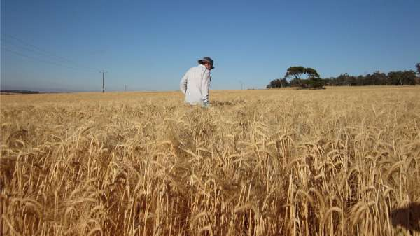 Emerging weeds show resilience to herbicide treatments