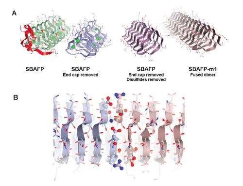 Engineering self-assembling amyloid fibers