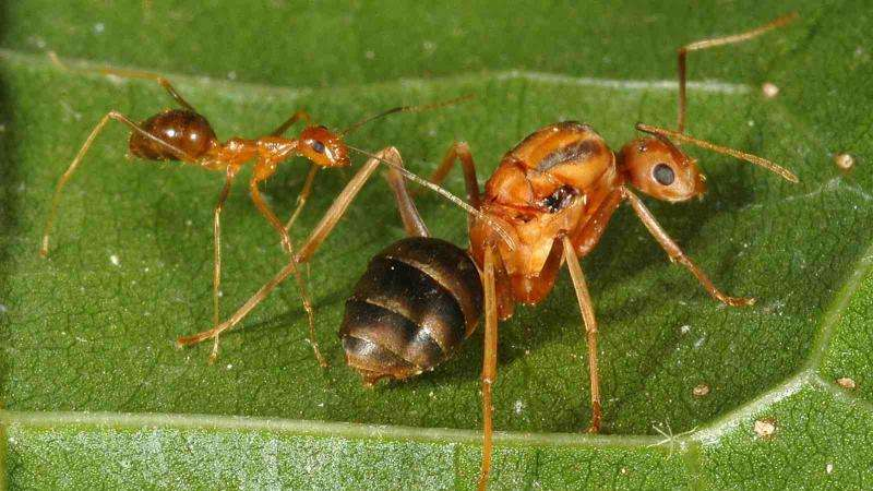 Enhancing biosecurity against pest threats across the Pacific