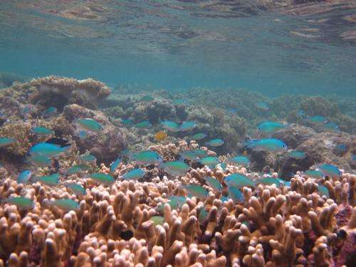 Equatorial fish babies in hot water