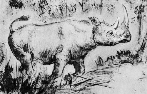 Extinct rhino's eating habits lead to new reconstructions of ice age environments