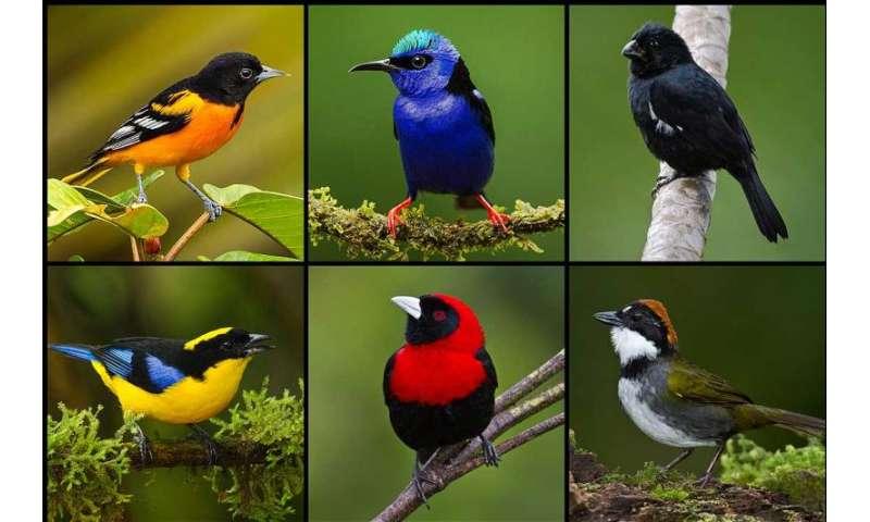 Female birds show their true colours