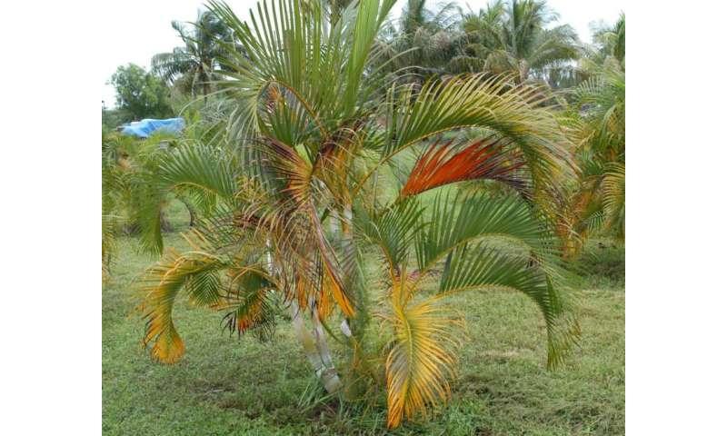 Fertilization regimen reduces environmental impact of landscape palms
