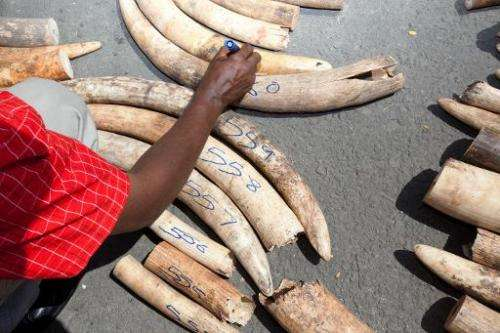 File picture shows a Kenya Wildlife Service officer numbering elephant ivory tusks on July 3, 2013 after a container arriving fr