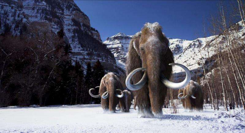 First comprehensive analysis of the woolly mammoth genome completed