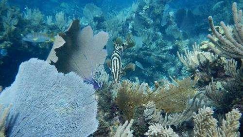 Fish pee helps keep coastal ecosystems healthy, thriving