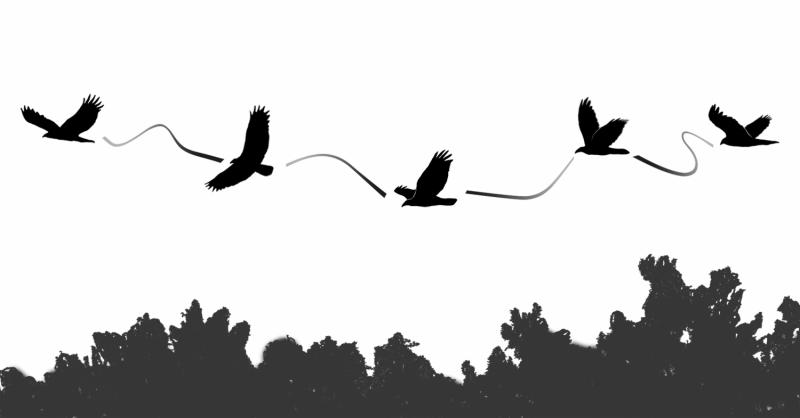 Flexible soaring style keeps vultures aloft longer