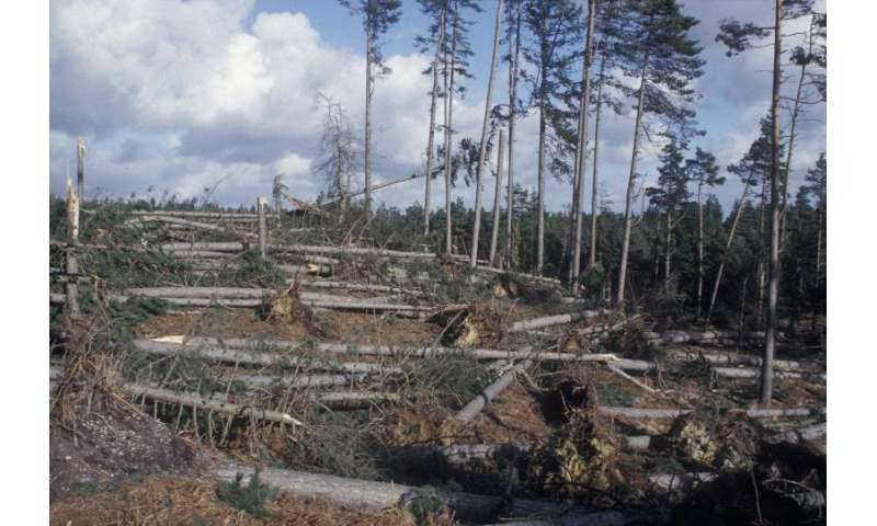 Forest storm resilience improved with latest software