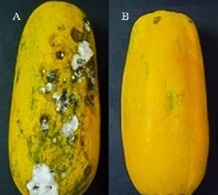 Pictures Of Papaya Diseases