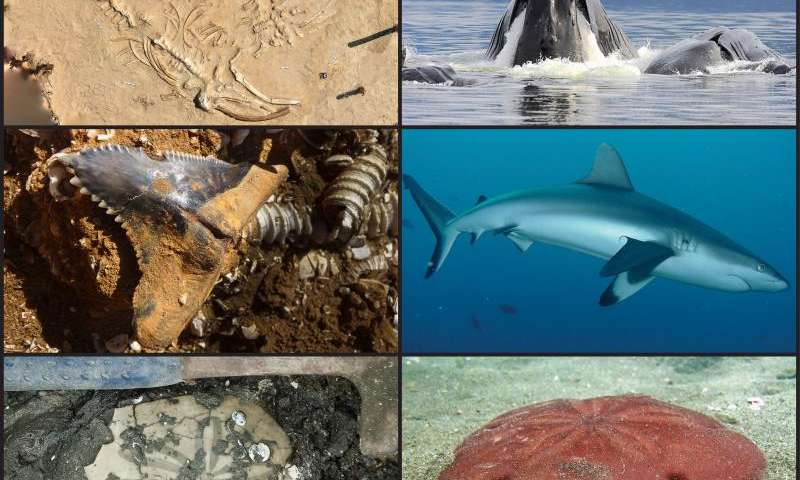 Fossils help identify marine life at high risk of extinction today