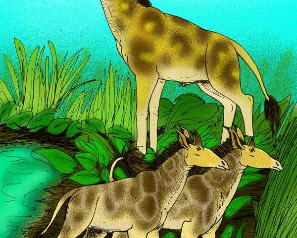 Fossil vertebrae reveal clues to evolution of long neck in giraffe