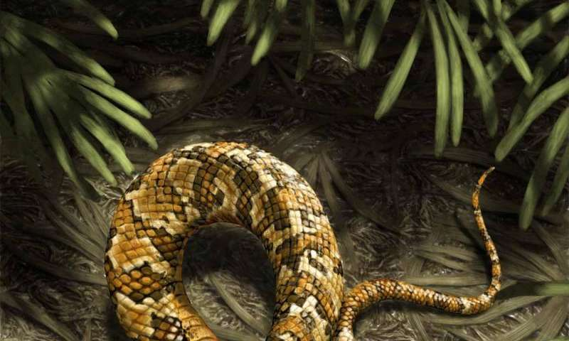 Four-legged fossil suggests snakes evolved from burrowing ancestors