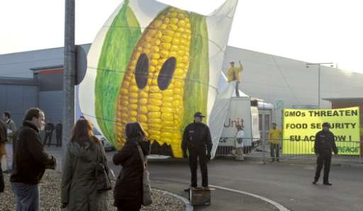 Free-trade talks between the EU and the US, which frowns on GMO-use restrictions, face complications as the EU grapples with tho